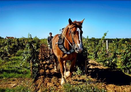 Steven HEWISON, Château Le Puy. Source: VINSNATURE LE BLOG !